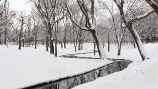 北海道大学の敷地内の写真・画像素材[941341]
