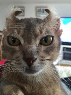 近くにカメラを見て猫のアップの写真・画像素材[941514]