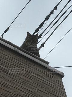 建物の側に座っている猫の写真・画像素材[941567]