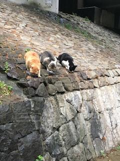 三猫士の写真・画像素材[941673]