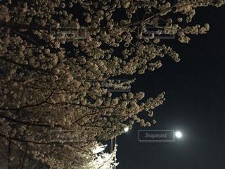 夜桜街道の写真・画像素材[941680]