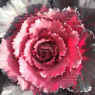 花の様な葉の写真・画像素材[943307]