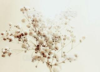 花雪の写真・画像素材[953103]