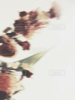 かすれたドライフラワーの写真・画像素材[953877]
