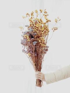 花束の写真・画像素材[976182]