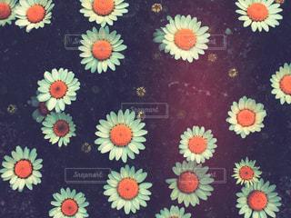 花の写真・画像素材[1108240]