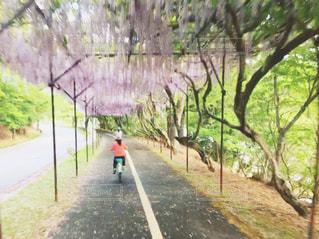 道の端に木のパスの写真・画像素材[1170139]