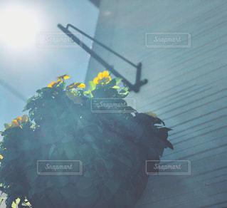 ハンギングバスケットの写真・画像素材[1533299]