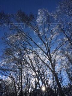自然の写真・画像素材[56066]