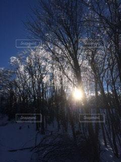 自然の写真・画像素材[56067]