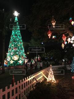夜ライトアップされたクリスマス ツリーの写真・画像素材[942081]