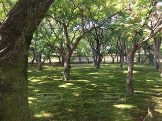 木々と木漏れ日 - No.942702