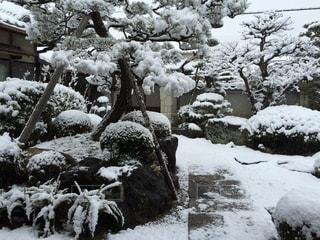 雪の日本庭園 - No.943134