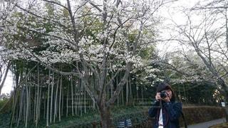 木の隣に立っている人の写真・画像素材[942617]
