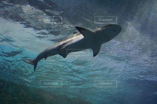水族館 サメの写真・画像素材[942418]