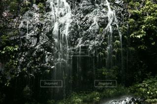 森の中の滝の写真・画像素材[960593]