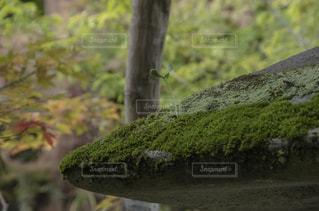 発芽の写真・画像素材[961572]