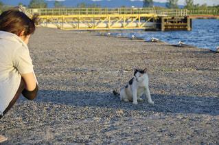 ビーチで犬を持つ女性の写真・画像素材[961579]
