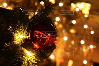 夜ライトアップされたクリスマスツリーの写真・画像素材[944052]