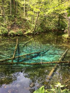 北海道の裏摩周にある神の子池の写真・画像素材[1632479]
