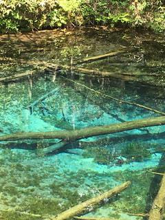 北海道の裏摩周にある神の子池の写真・画像素材[1632484]