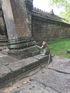 猿の威嚇の写真・画像素材[945208]