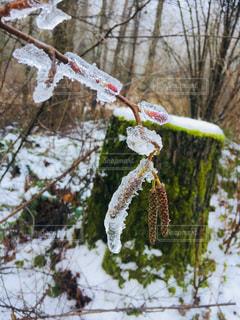 冬の珍しい景色の写真・画像素材[943273]