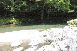 近くに池のアップの写真・画像素材[942543]