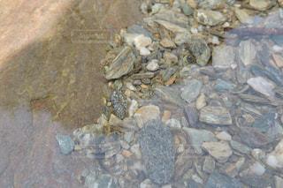 川の石のアップの写真・画像素材[942545]