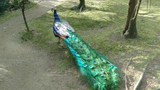 草の中に立っている鳥の写真・画像素材[942549]