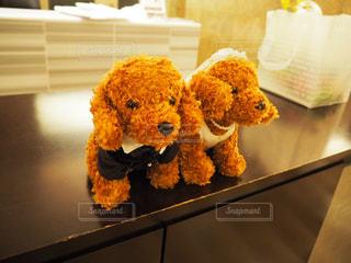 犬の夫婦の写真・画像素材[943028]