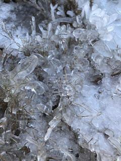 凍った草の写真・画像素材[966665]