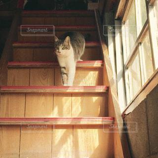 3匹の猫の写真・画像素材[943077]