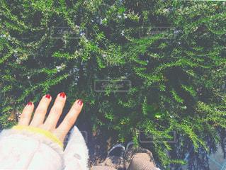 ハーブ園でひとときの写真・画像素材[943647]