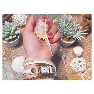 テーブルの上で時計と貝殻の写真・画像素材[943741]