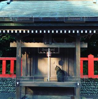 神社の猫の写真・画像素材[1714988]
