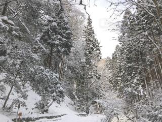 雪山の写真・画像素材[994792]