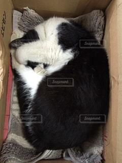 ソファの上で眠っている猫の写真・画像素材[945685]