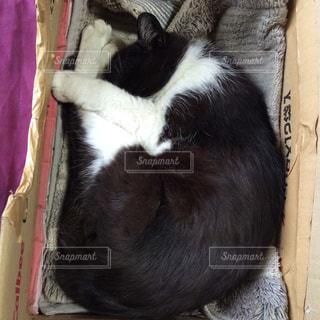 ソファの上で眠っている猫の写真・画像素材[945692]
