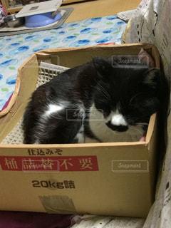 箱の上に横たわる猫の写真・画像素材[945729]