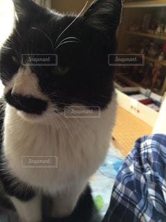 テーブルの上に座って黒い猫の写真・画像素材[945745]