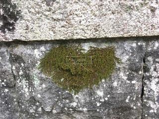 ハート型の苔の写真・画像素材[947291]