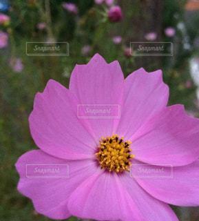 近くの花のアップ - No.943637