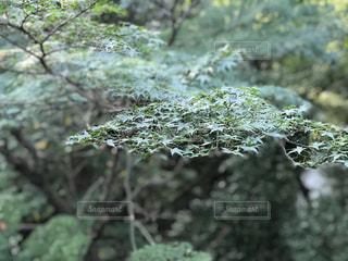近くに緑の森のの写真・画像素材[944860]