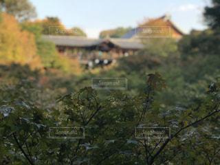 フォレスト内のツリーの写真・画像素材[944861]