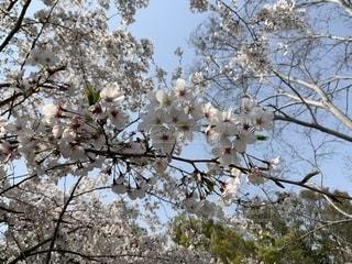 春の写真・画像素材[1987022]