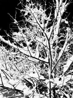 雪の中の木の写真・画像素材[968095]