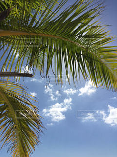 ヤシの木と晴天の写真・画像素材[943769]