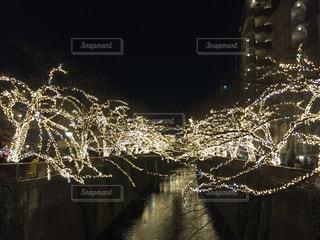 目黒川のイルミネーションの写真・画像素材[943772]
