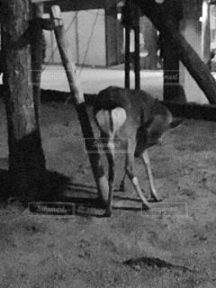 犬の横に立っている人 - No.944074